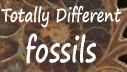 Totally Different Fossils & Crystal Gifts